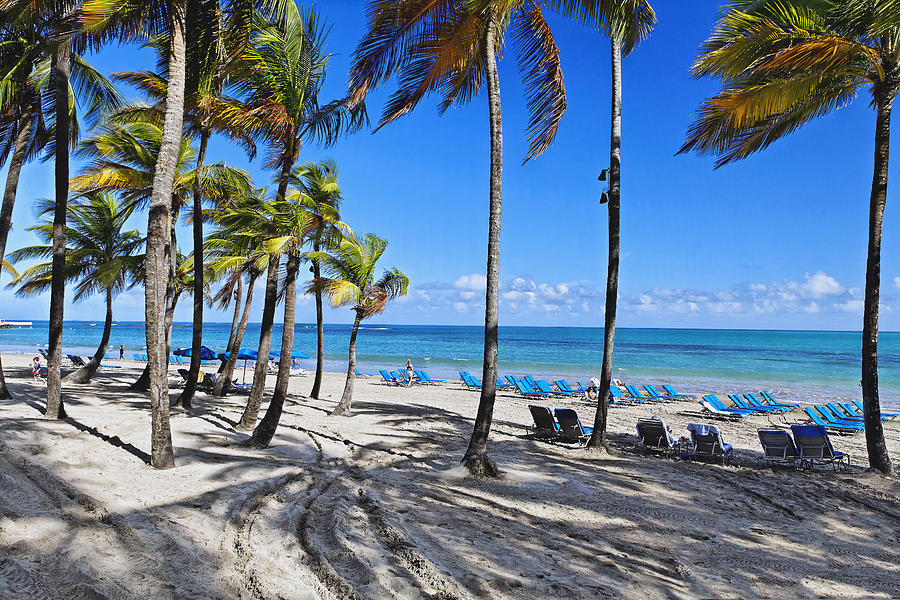 Palm Trees Shaded Beach Photograph