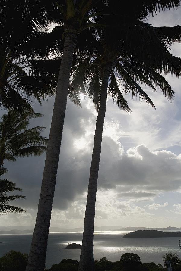 Palm Trees Silhouetted Against Dark Photograph