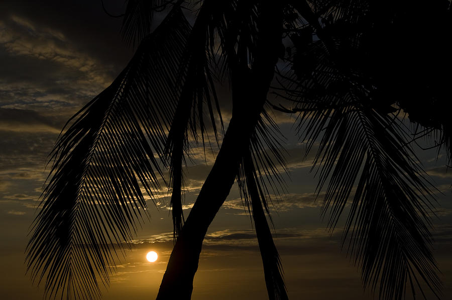 Palm Trees Silhouetted By The Setting Photograph