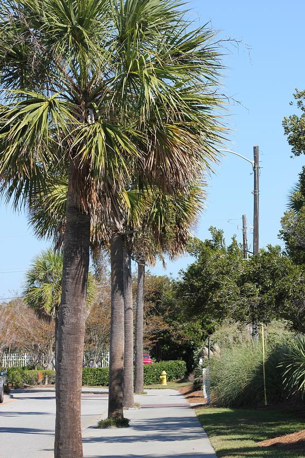 Palm Way Photograph