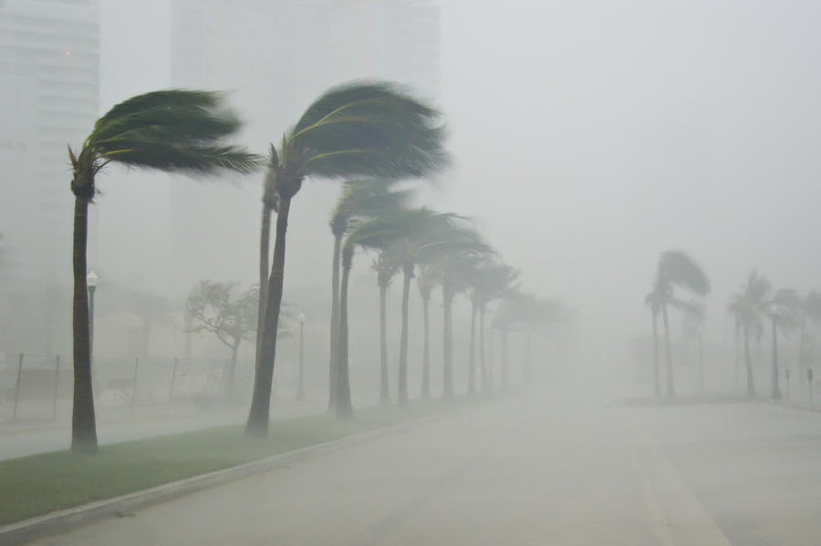 Palms Blow In 100 Mile-per-hour Winds Photograph