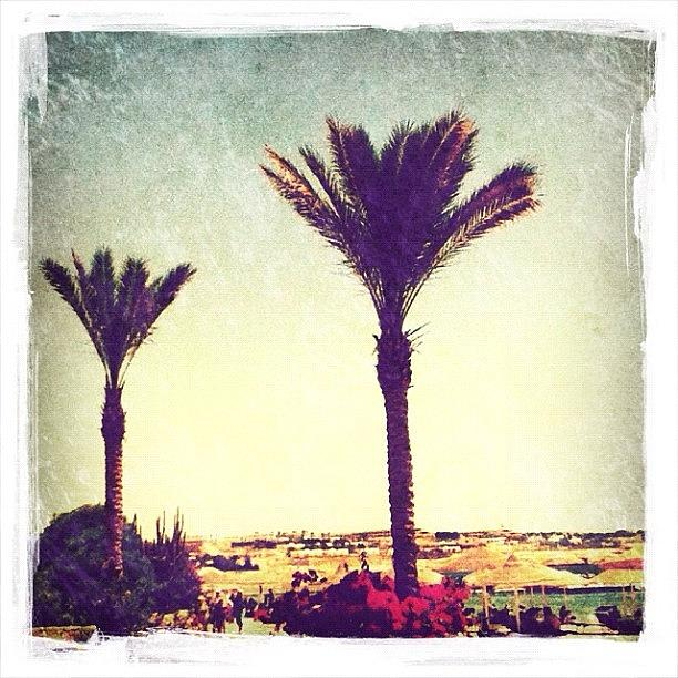 #palms #followme #instagram #instagood Photograph  - #palms #followme #instagram #instagood Fine Art Print