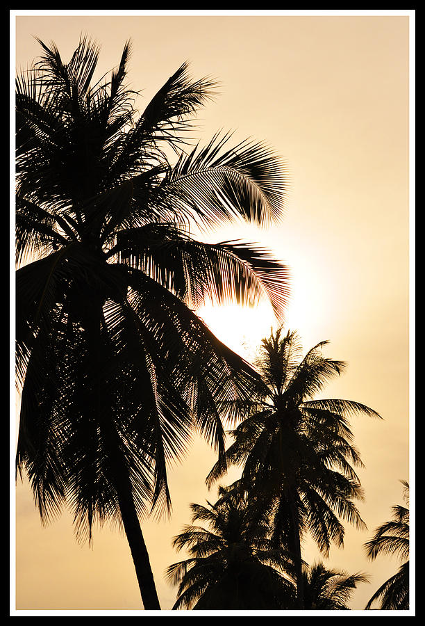 Palms Photograph  - Palms Fine Art Print