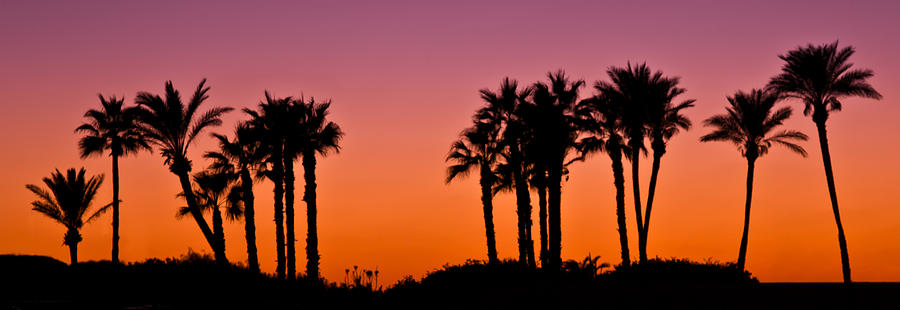 Palms Silhouettes At Sunset Photograph