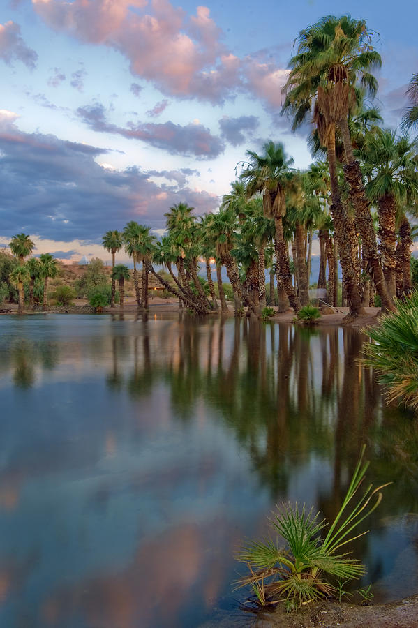 Palms Trees Over Papago Lake Photograph  - Palms Trees Over Papago Lake Fine Art Print