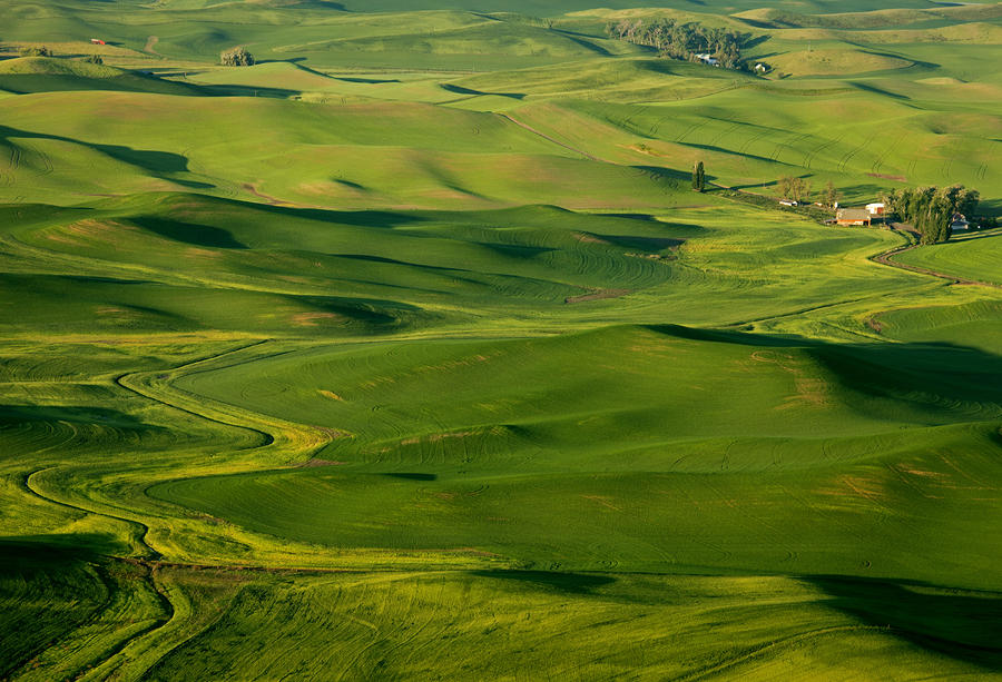 Palouse Spring Photograph