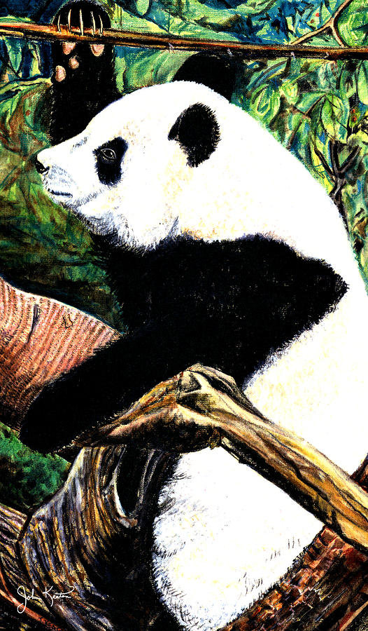 Panda Bear Drawing  - Panda Bear Fine Art Print