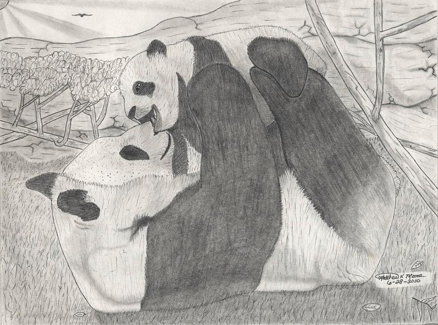 Panda Family Drawing  - Panda Family Fine Art Print