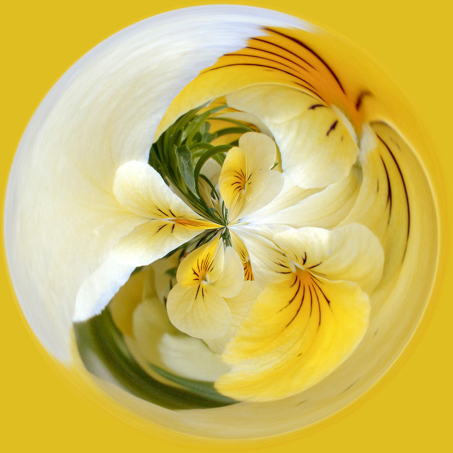 Pansy Ball Photograph  - Pansy Ball Fine Art Print