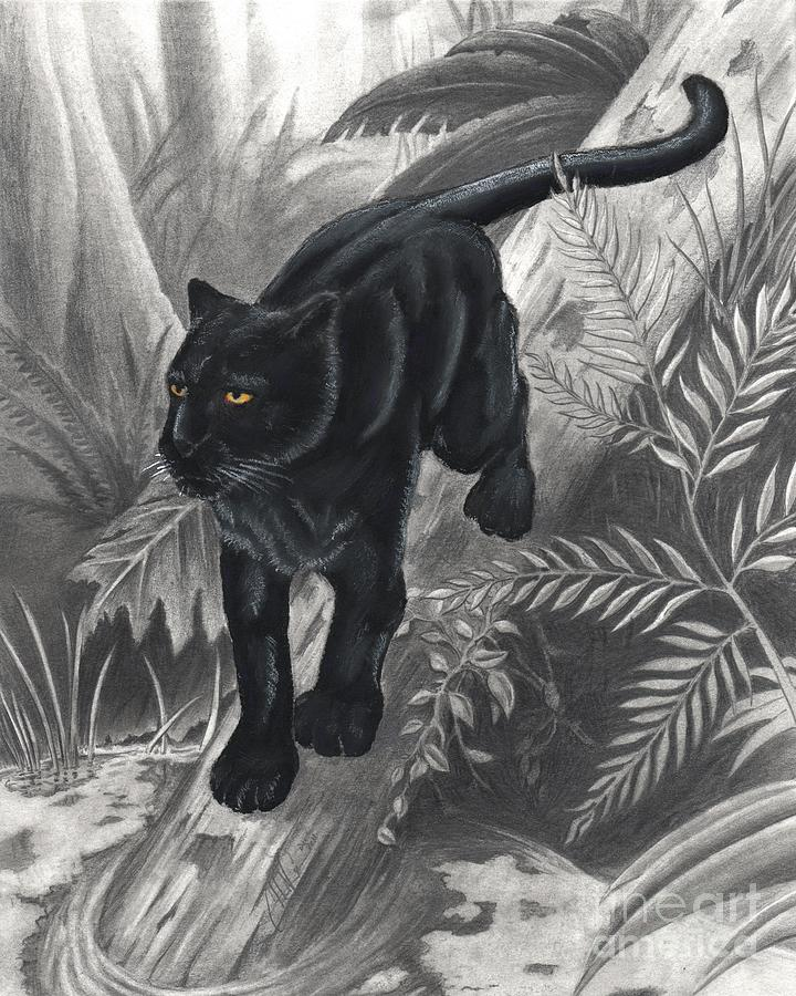 Panther By The Water Drawing