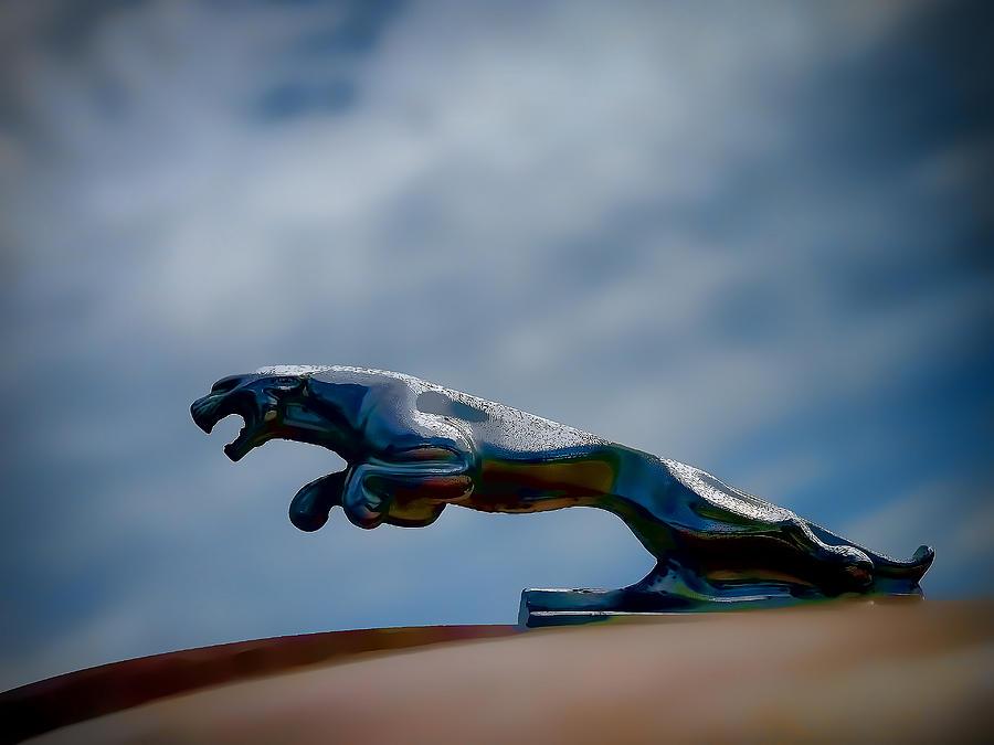 Panther Hoodie Digital Art