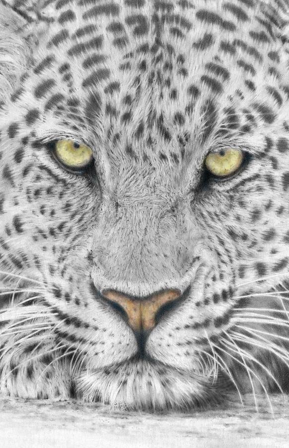 Panthera Pardus - Leopard Close-up Drawing