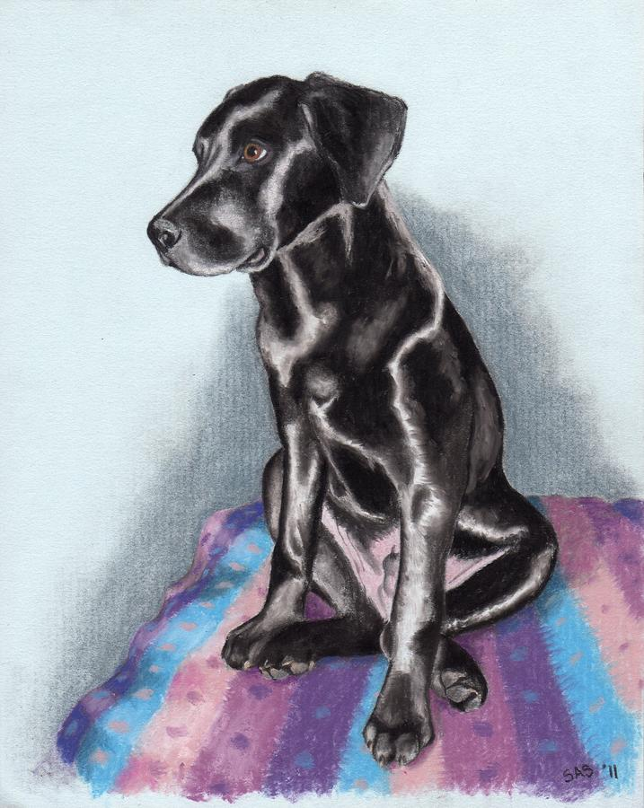 Papi The Labby Drawing  - Papi The Labby Fine Art Print