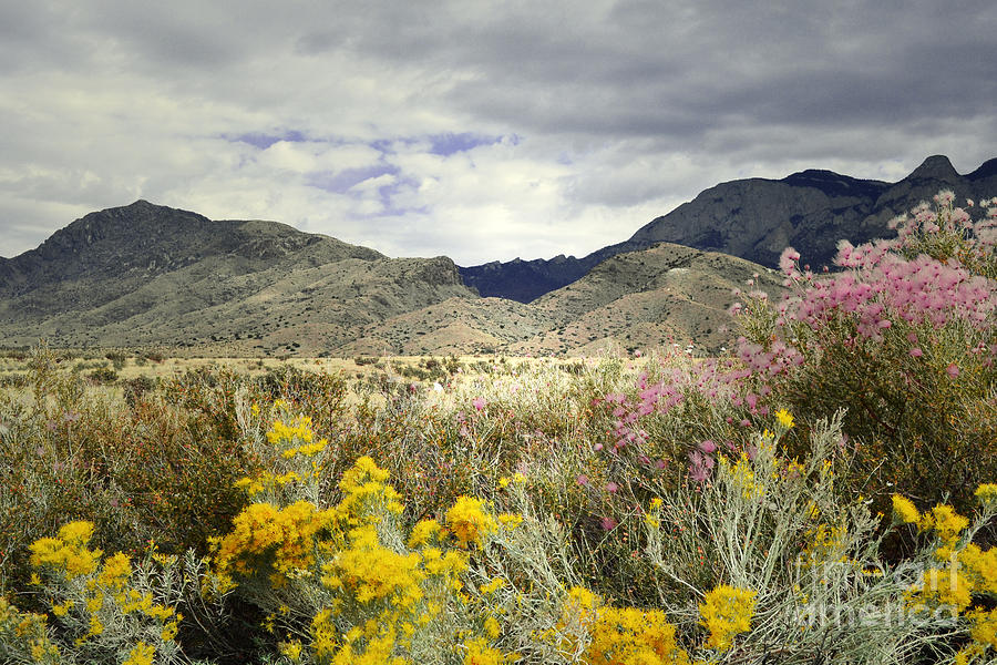 Paradise Mountain Photograph  - Paradise Mountain Fine Art Print