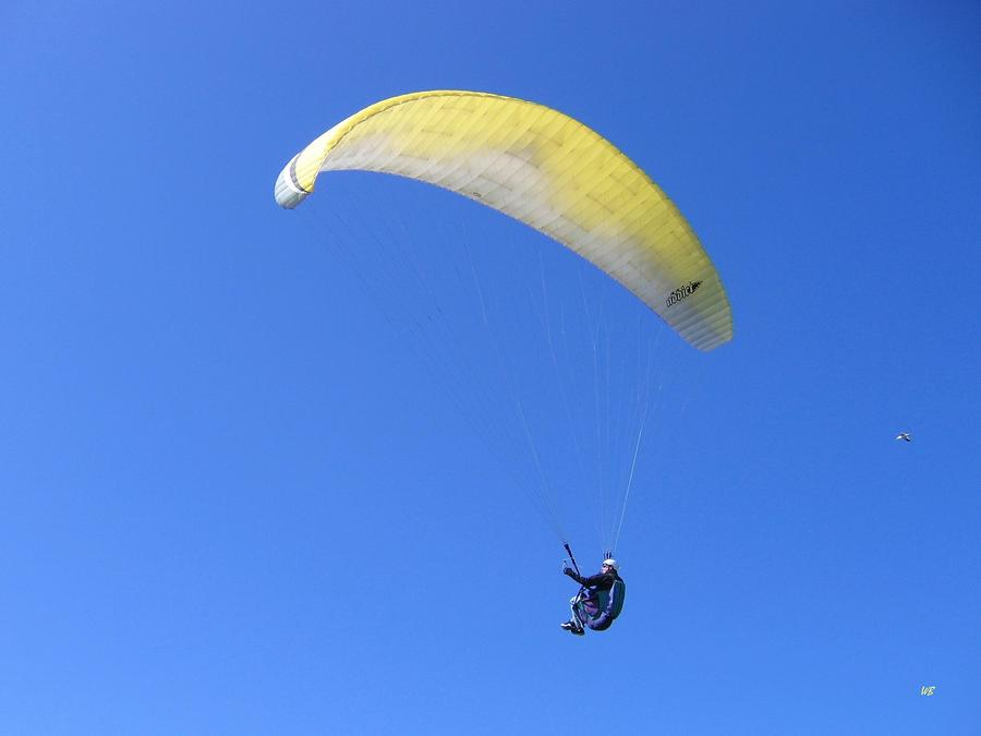 Paraglider And Seagull Photograph  - Paraglider And Seagull Fine Art Print