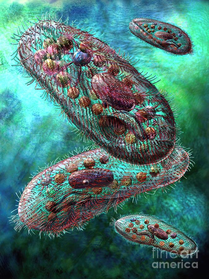 Paramecium Digital Art
