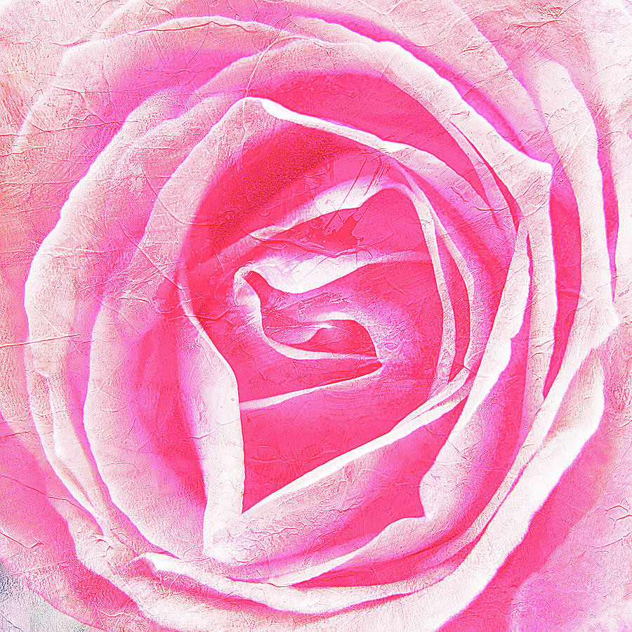 Square Photograph - Parfume Of Roses by Susanne Kopp