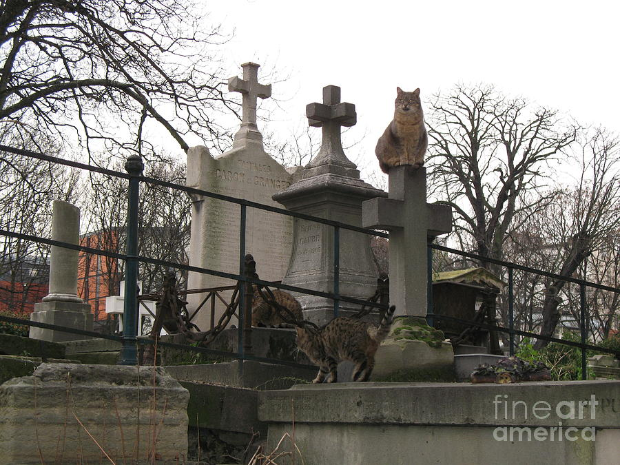 Paris Cemetery - Pere La Chaise - Wild Cats  Photograph