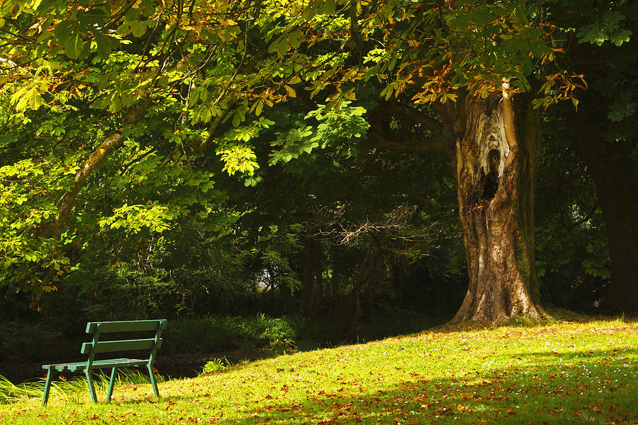 Park Bench Beside The Owenriff River In Photograph