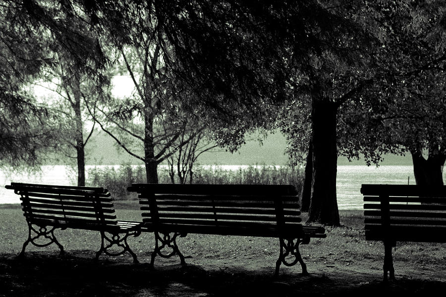 Park Benches In Autumn Photograph  - Park Benches In Autumn Fine Art Print