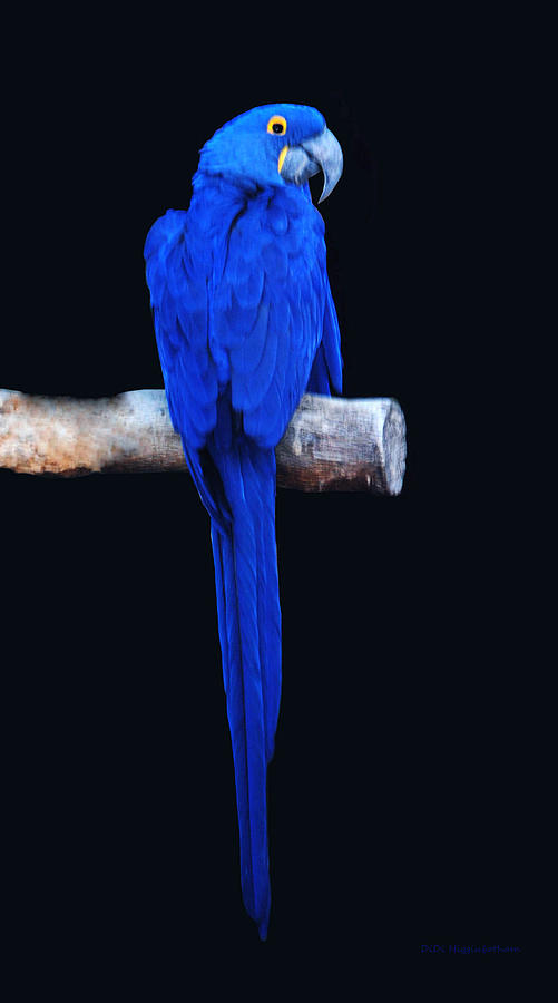 Parrot Perfection Photograph  - Parrot Perfection Fine Art Print