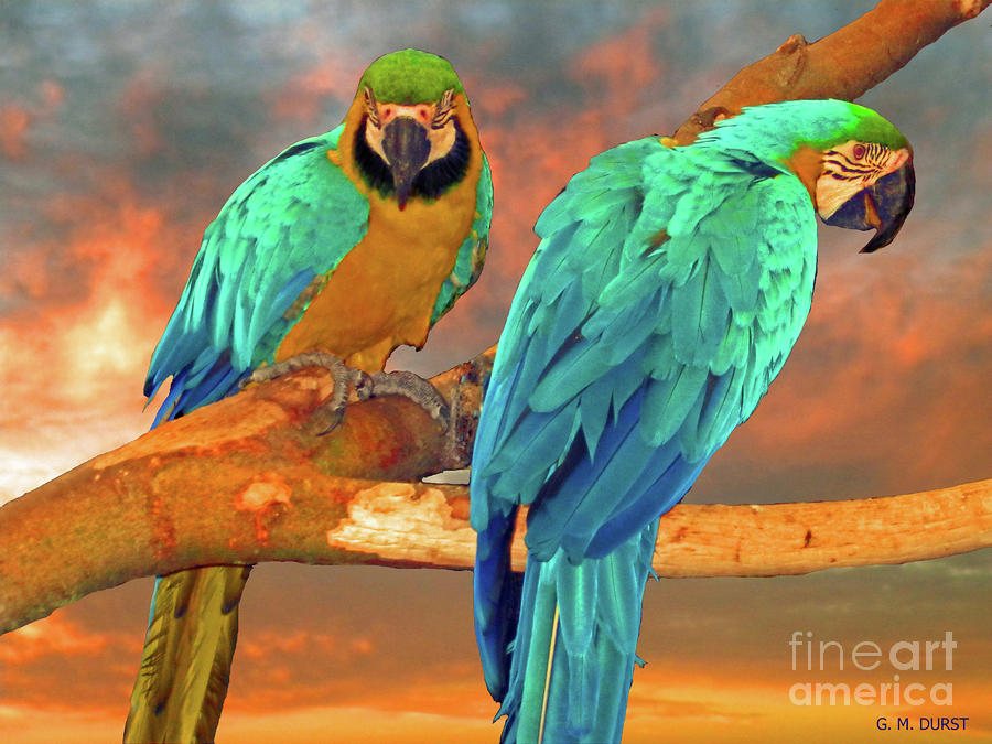 Parrots At Sunset Photograph  - Parrots At Sunset Fine Art Print