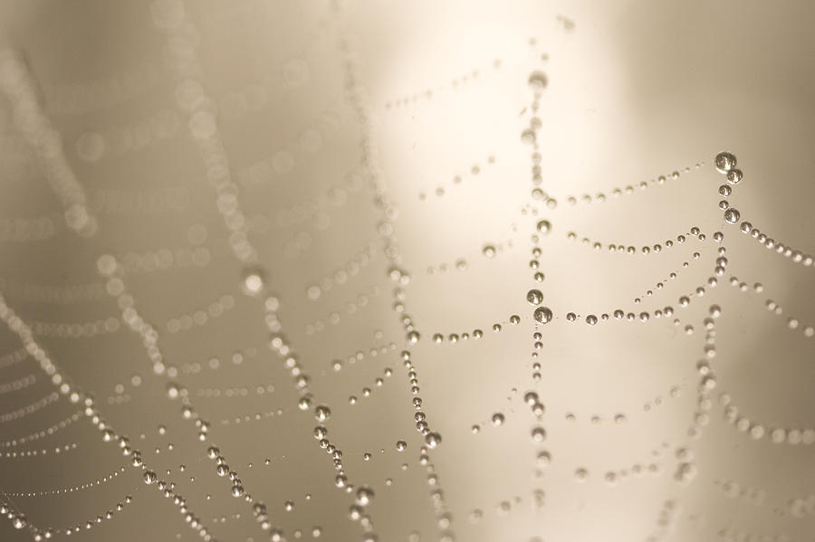 Photography Photograph - Part Of A Spider Web Shows by Phil Schermeister