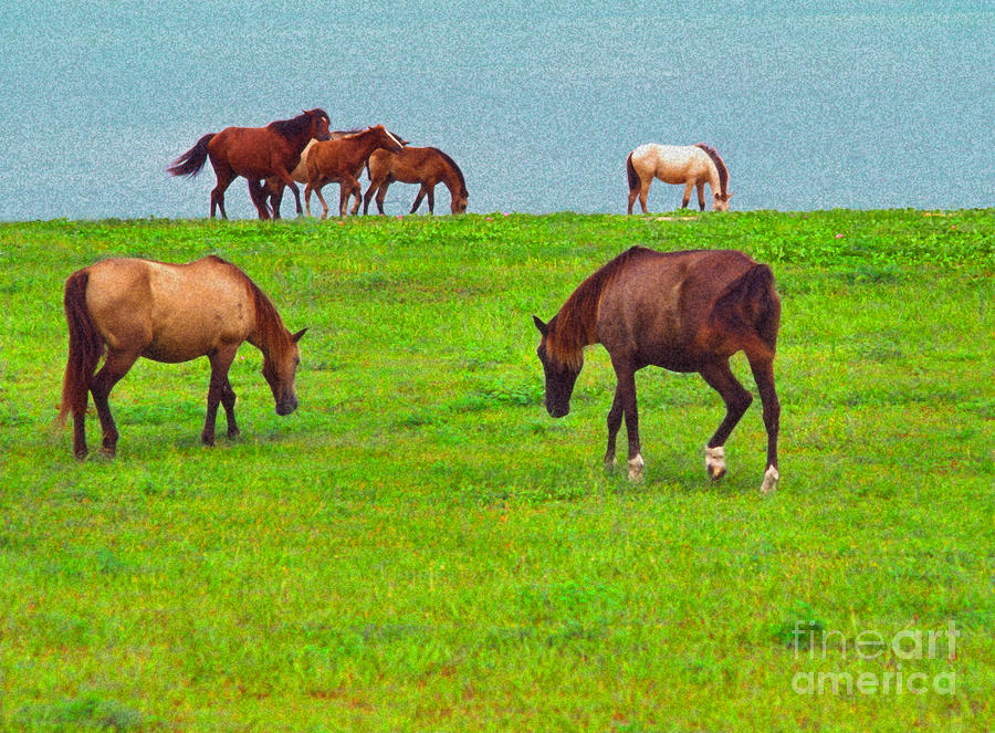 Paso Fino Horses Graze By Seaside Digital Art  - Paso Fino Horses Graze By Seaside Fine Art Print