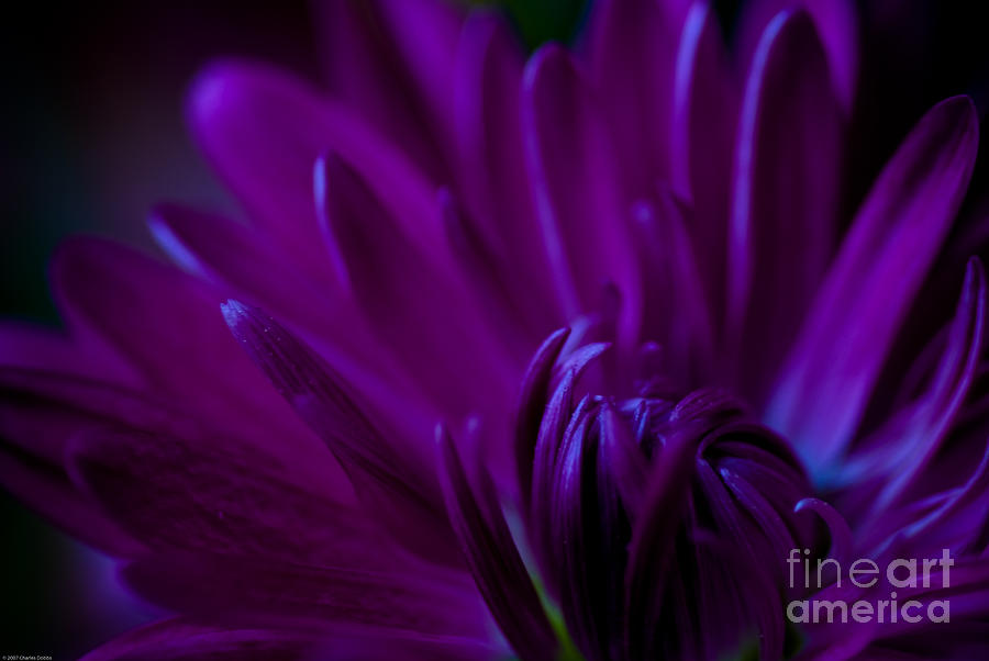 Passion Photograph  - Passion Fine Art Print