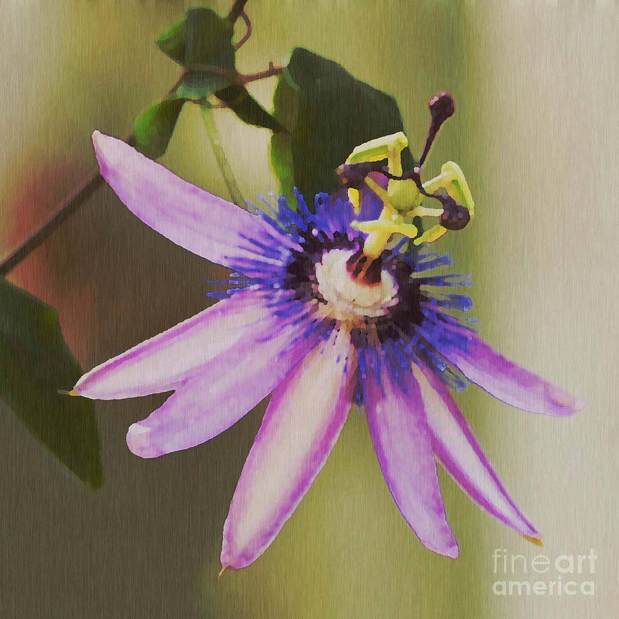 Passion Flower Painting