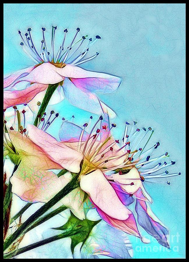 Pastel Petals Photograph