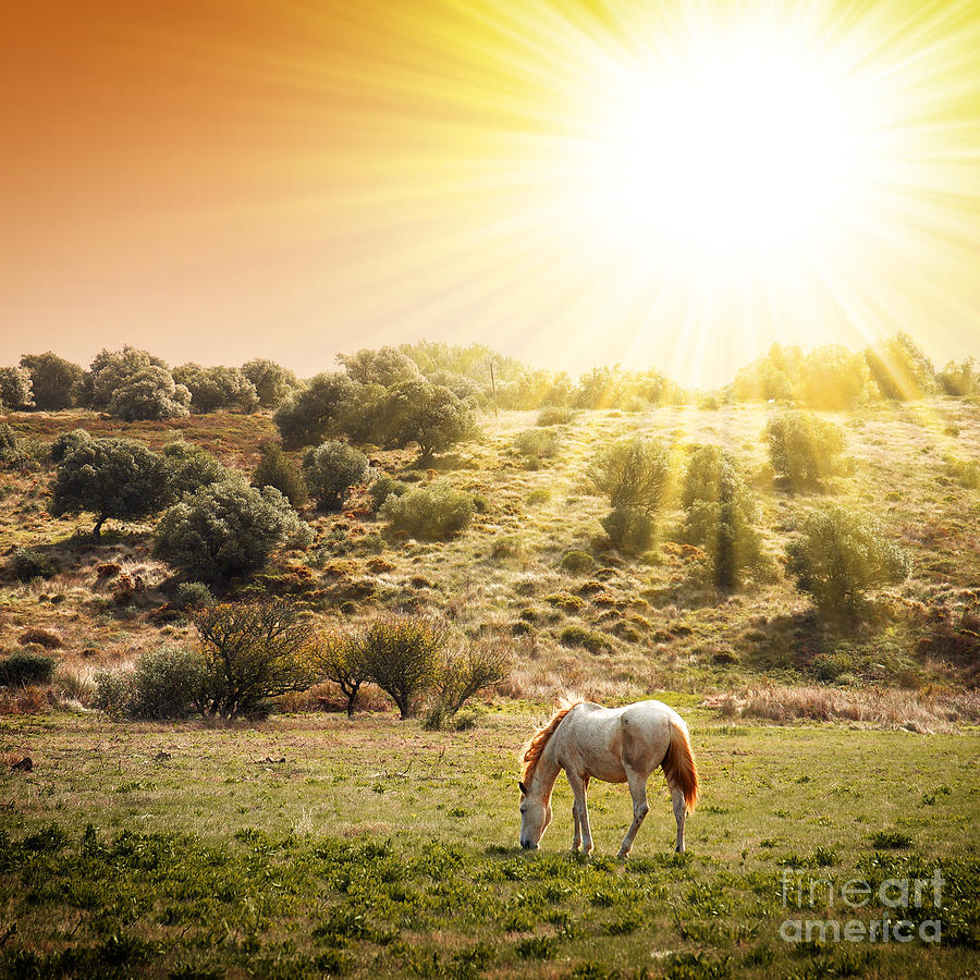 Pasturing Horse Photograph