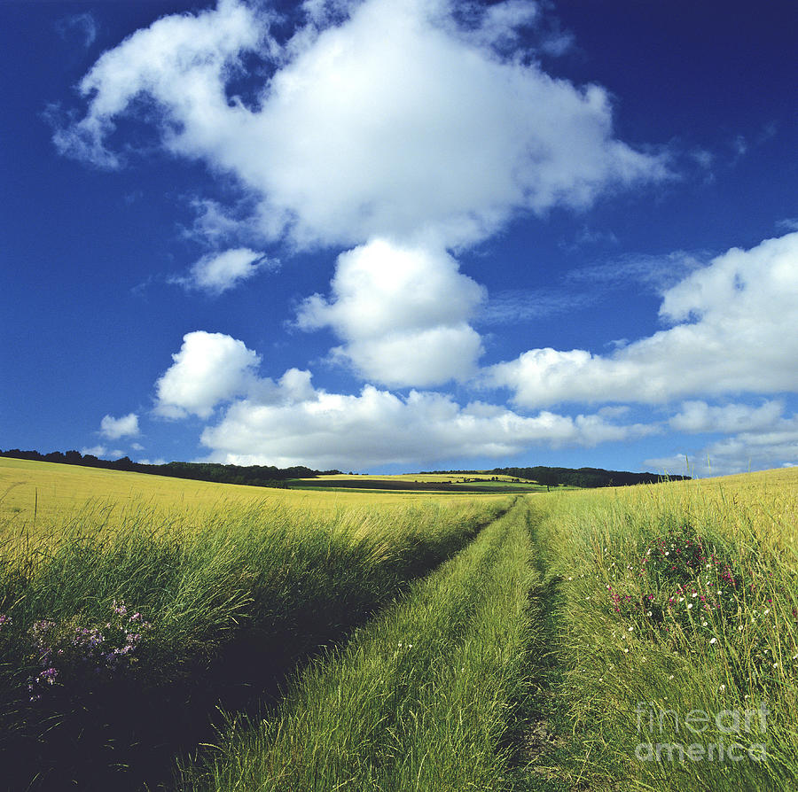 Path In A Countryside Photograph  - Path In A Countryside Fine Art Print