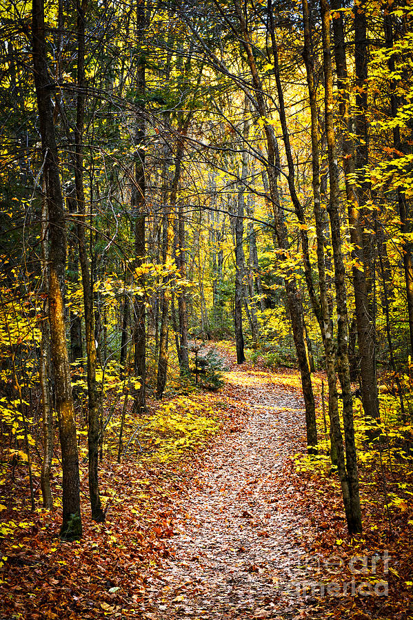 Path In Fall Forest Photograph  - Path In Fall Forest Fine Art Print