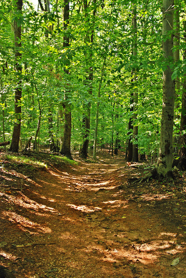 Path In The Woods - Holmdel Park Photograph