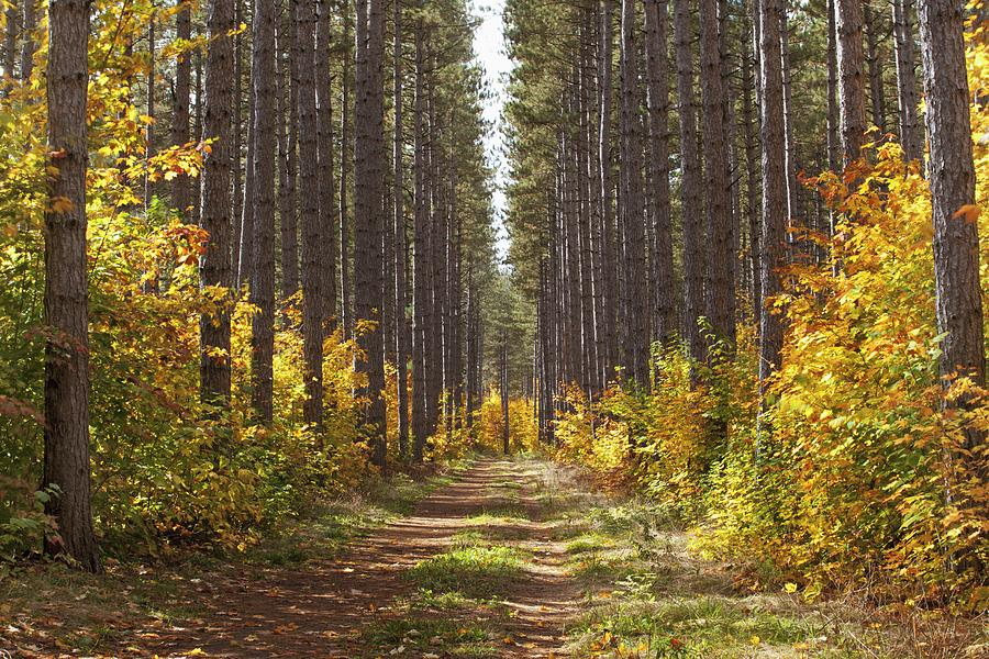 Path Into The Forest In Autumn Sault Photograph