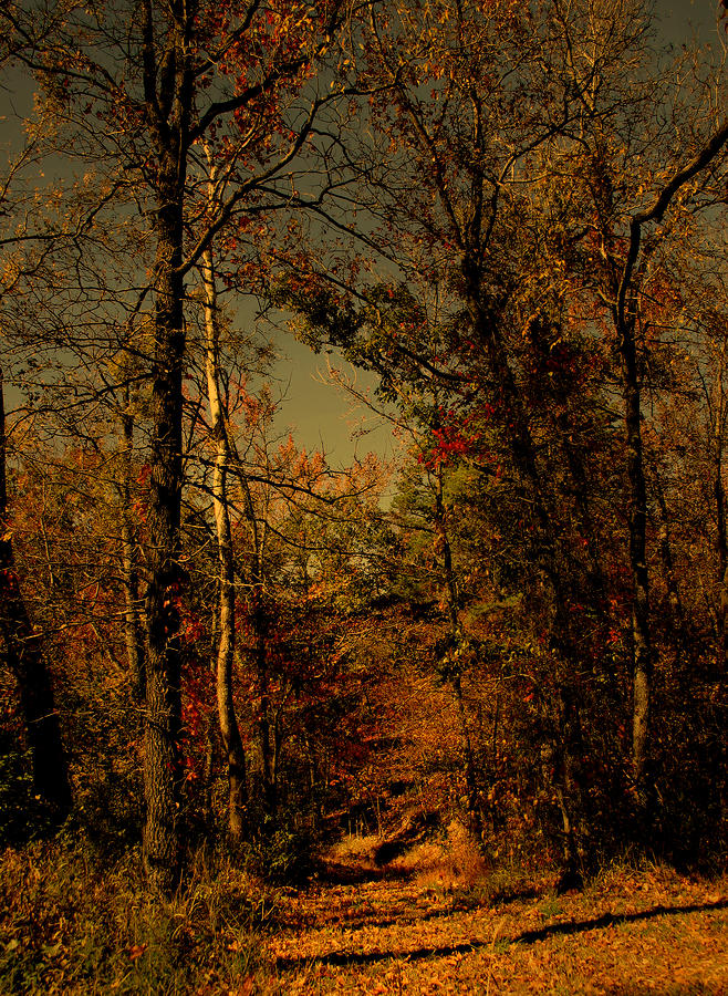 Path Into The Woods Photograph  - Path Into The Woods Fine Art Print