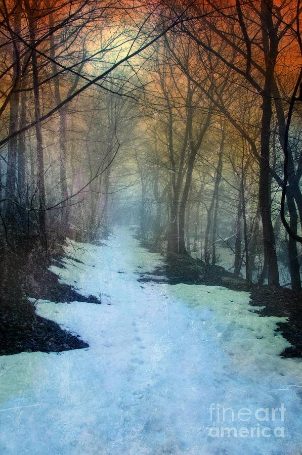 Path Through The Woods In Winter At Sunset Photograph