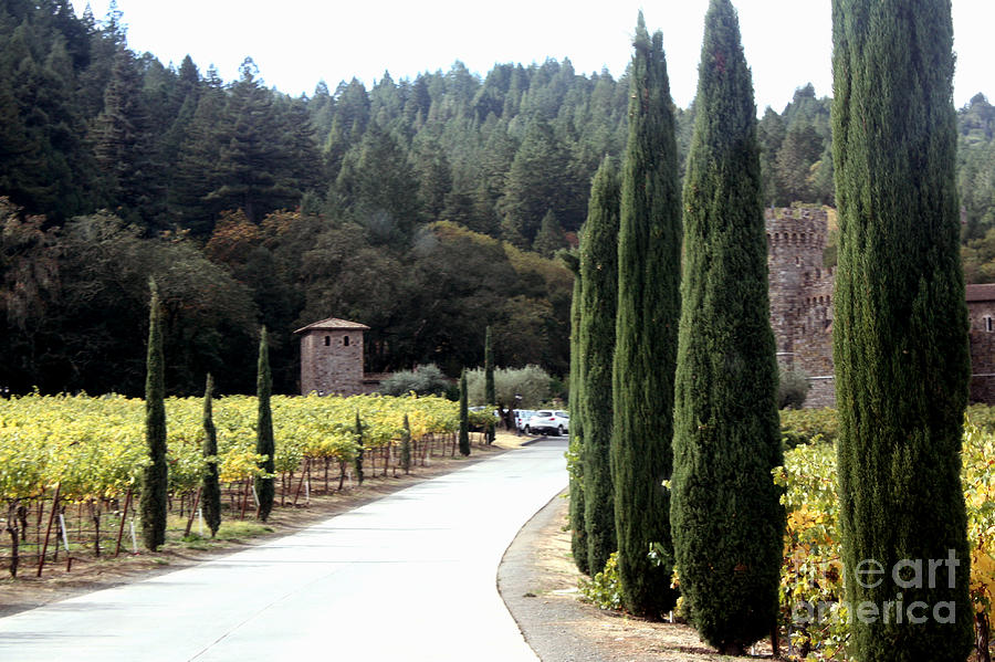 Napa Valley Photograph - Path To Amerosa by Gail Salituri