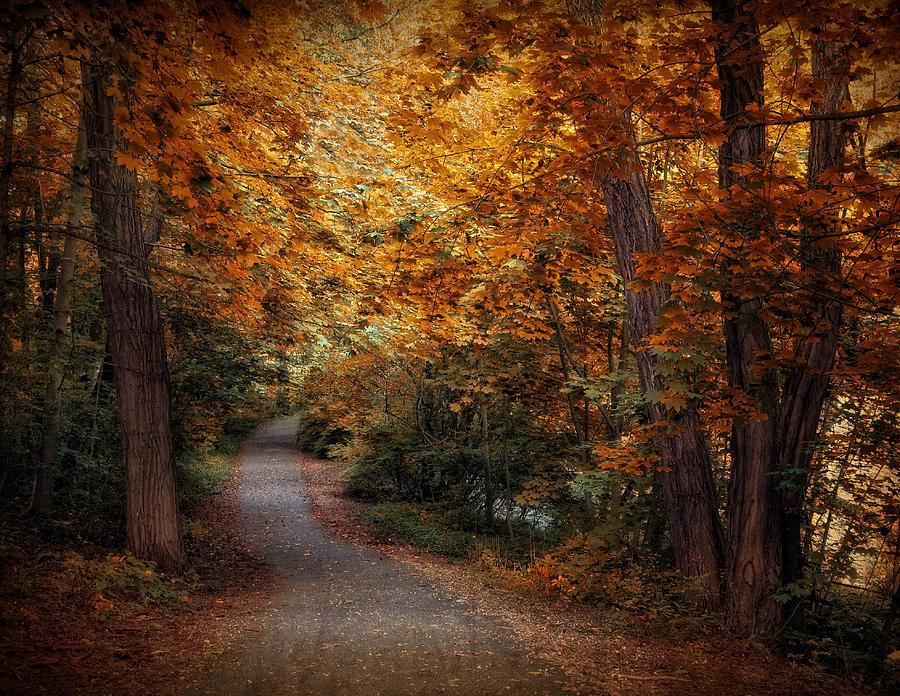 Path To Autumn  Photograph