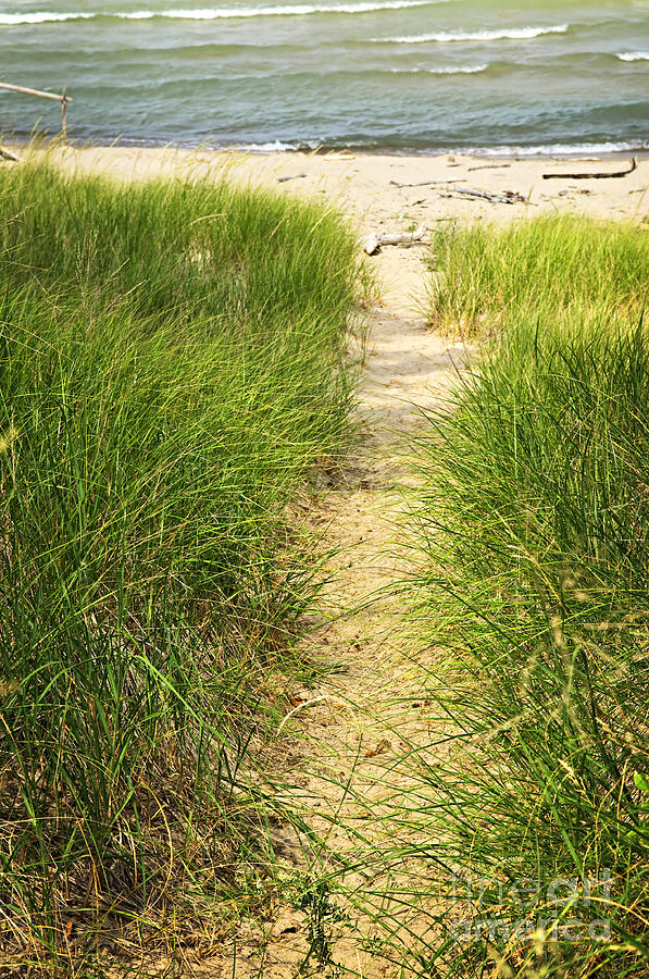Path To Beach Photograph  - Path To Beach Fine Art Print