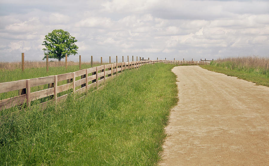 Pathway Surrounded By Wooden Fence Photograph