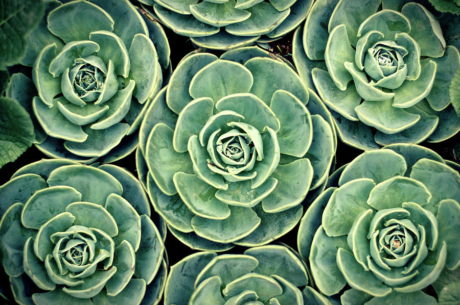 Nature'-s Pattern Photography: 35 Outstanding Photos - noupe