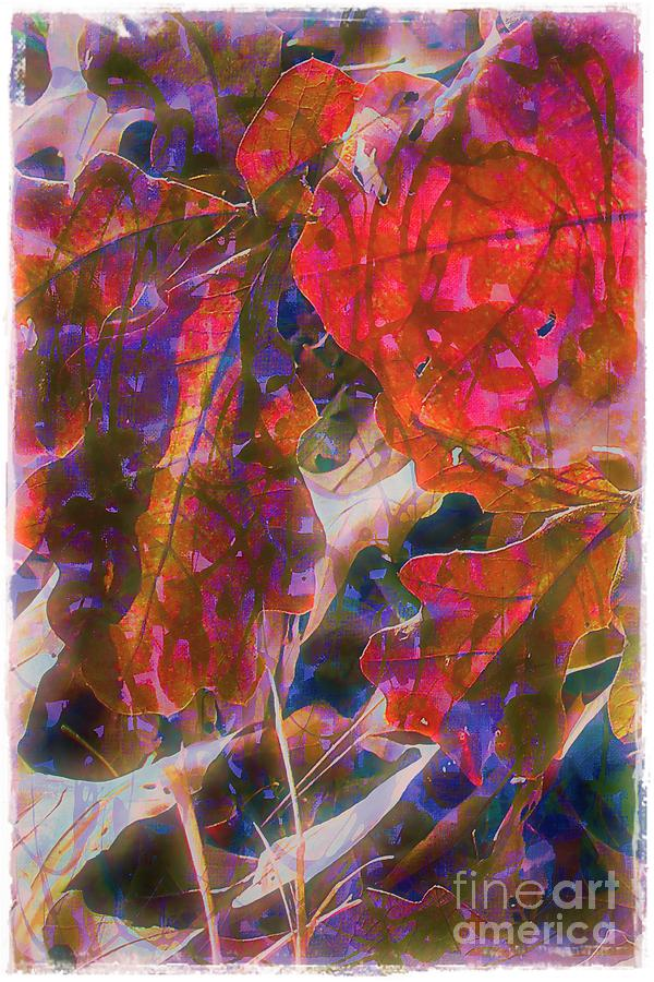 Autumn Photograph - Patterns In Scarlet by Judi Bagwell