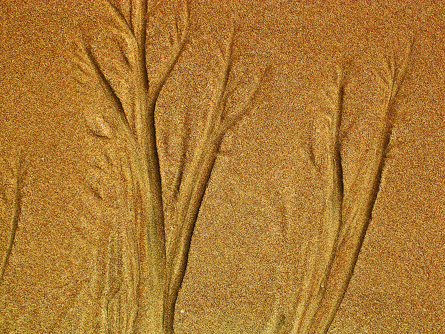 Patterns In The Sand Photograph  - Patterns In The Sand Fine Art Print