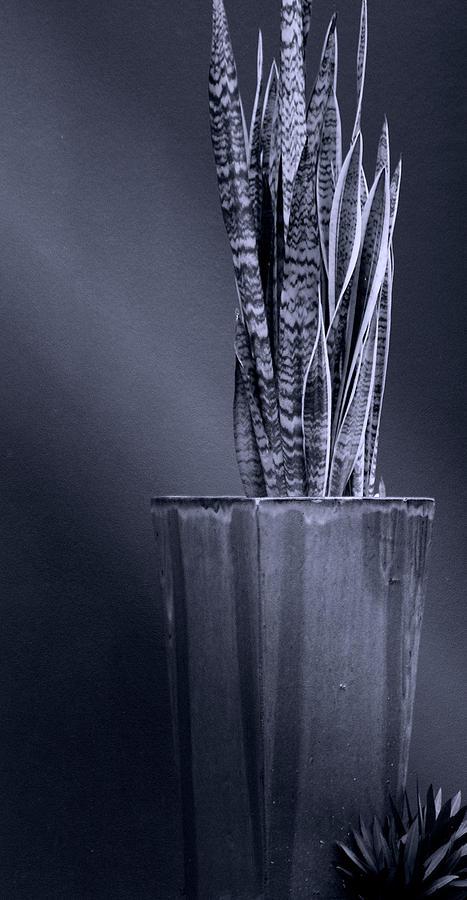 Patterns Of Woven Light Photograph