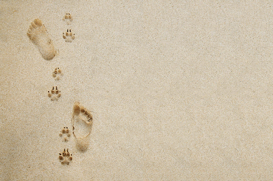 Paw And Footprint 1 Photograph