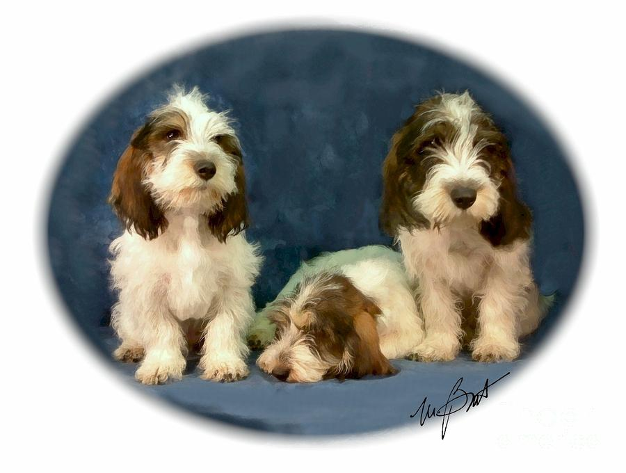 Pbgv Pups Digital Art  - Pbgv Pups Fine Art Print
