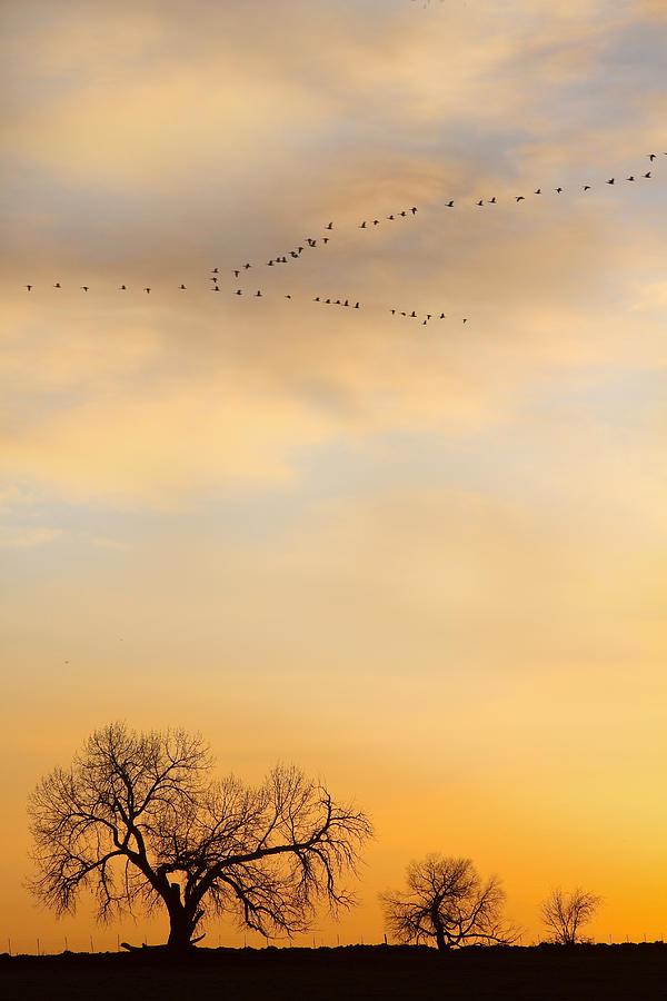 Peace And Harmony Photograph