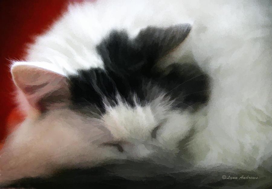 Peaceful Slumber Photograph